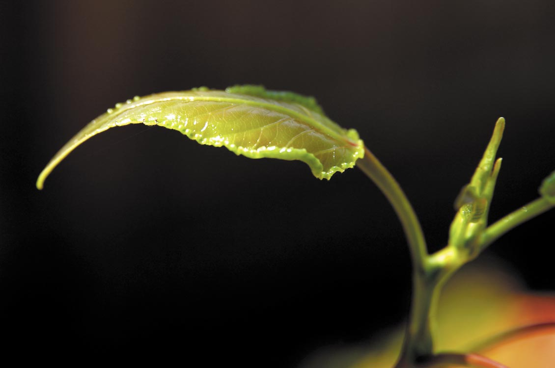 Società Servizi Fefè Ennio - Servizi per l'industria, giardinaggio, cura del verde